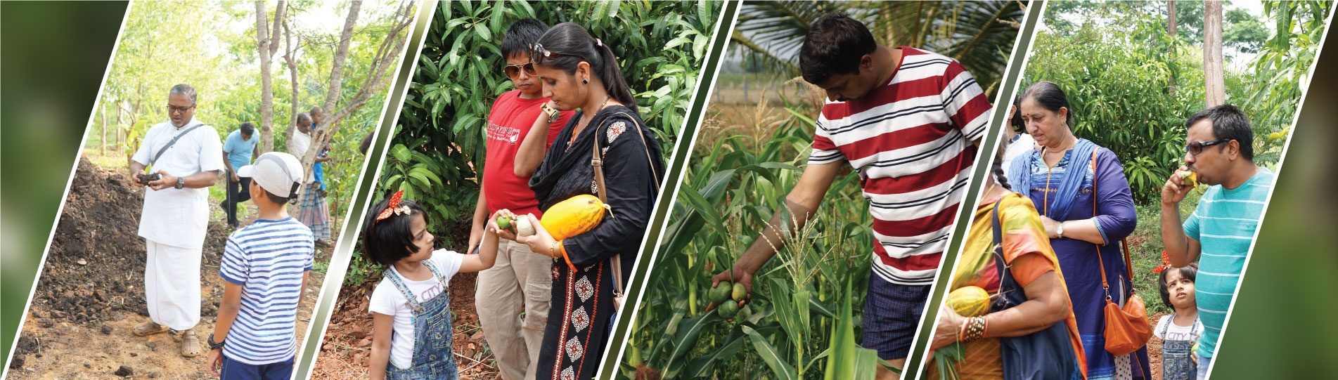 Plant yielding fruits at chukkimane