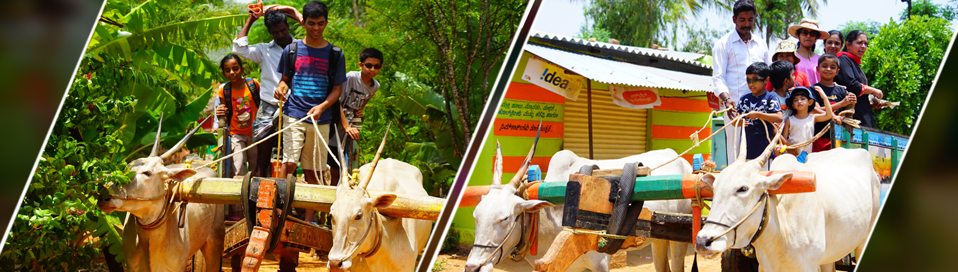 Bullock Cart Ride near Bangalore