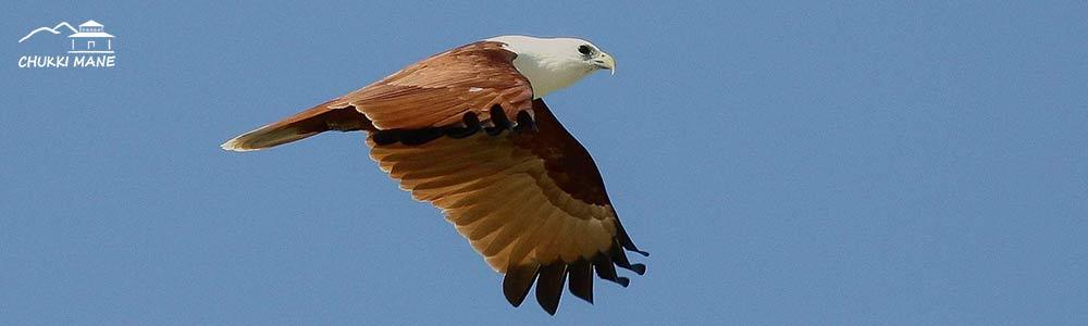 bird watching, bird watching near bangalore, bird sanctury, spot birds, benefits of bird watching
